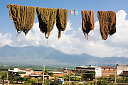 Bundles of wool colored with natural dyes dry on a clothesline at the home and workshop of Raul Chavez Sosa in the famed Zapotec weaving village of Teotitlan del Valle, Oaxaca state, Mexico on July 27, 2008.
