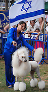 Israel, Tel Aviv, The International Dog Show 2010 White Standard Poodle