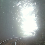Train track in the forest