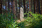 Leśno, 2011-07-09. Stela na jednym z kurhanów na ścieżce lichenologiczno-kulturowej w Leśnie