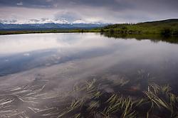 Mt. McKinley (Denali) and the Alaska Range looms over a glacial kettle pond near Wonder Lake in Denali National Park and Preserve in Alaska.