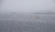 Fishing boat during heavy winter snowfall, off the island of Moskenesoya, Lofoten Islands, Arctic Norway