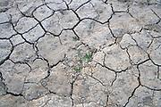 Nederland, Nijmegen. 19-7-2018 Drooggevallen bedding van een zijgeul van de Waal in de Ooijpolder. Door de lage waterstand is er geen aanvoer van water vanuit de rivier . Door het uitblijven van regen is de grond gebarsten. Foto: Flip Franssen
