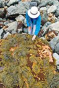 Hiker exploring Jade Cove, Los Padres National Forest, Big Sur, California