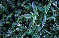 Frost on various plants.