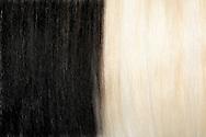 """Valais Blackneck (Capra aegagrus hircus), part of the fur. One of the oldest domestic goats of the world, rearing in canton of Valais and Switzerland. One of the most robust high mountain breeds. Conspicuous fur coloring, black forequarters and white hindquarters, with strong separating line. In principle the coat is long. Often the goats having long forehead hairs, which covering the eyes and also a beard. The long hairs protecting against cold and heat. Because of the attractive fur coloring and shaggy longhair the goats getting more and more enthusiasts in Germany. Bad Rippoldsau-Schapbach, Baden-Wuerttemberg, Germany.This picture is part of the series """"Creature's Coiffure""""..Walliser Schwarzhalsziege (Capra aegagrus hircus).Fellausschnitt der Walliser Schwarzhalsziege. Sie ist eine der aeltesten Hausziegenrassen der Welt. Sie wird vor allem in Kanton Wallis und in der Schweiz gehalten. Es ist eine robuste Hochgebirgsrasse. Auffaellig ist die Faerbung ihres Felles. Die Walliser Schwarzhalsziege kennzeichnet sich vor allem dadurch, dass die vordere Koerperhaelfte schwarz und die hintere weiss behaart ist mit einer sehr scharfen Trennungslinie. Das Fell ist grundsaetzlich langhaarig. Sie besitzen oft lange Stirnhaare, die ihre Augen bedecken, sowie einen Bart. Die langen Haare schuetzen sie sowohl vor Kaelte als auch Hitze. Wegen ihrer attraktiven Fellfaerbung und dem zotteligen Langhaar findet sie auch immer mehr Liebhaber in Deutschland. Bad Rippoldsau-Schapbach, Baden-Württemberg, Deutschland.Dieses Bild ist Teil der Serie ,,Die Frisur der Kreatur"""""""