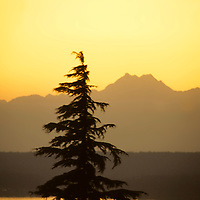 North America, USA, Washington. Warm orange tones surround a single pine tree in the Olympics.