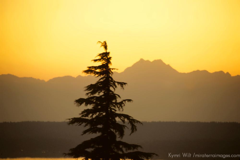 North America, USA, Washington. Warm orange tones surround a single pine tree in the Olympics.