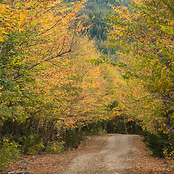 A logging road near First Connecticut Lake in Pittsburg, New Hampshire.