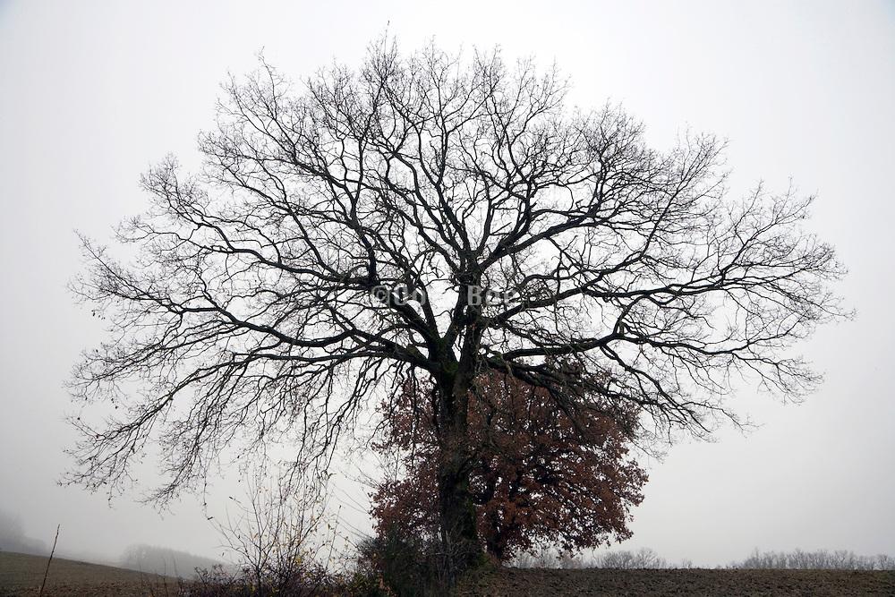 bare leafless tree against foggy background