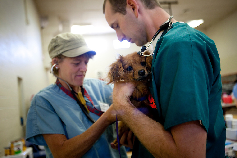 """MCDERMITT, NV - AUG 16:  Lead DVM Kate Kuzminski (L) checks out   """"Skippy"""" with Oregon State 3rd year vet student Paul Brady during a clinic sponsored by the Humane Society of the United States August 16, 2009 in McDermitt Nevada.  (Photograph by David Paul Morris)"""