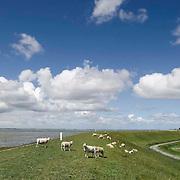 Nederland Ossenisse  gemeente Hulst  19 juni 2010 20100619      ..Serie landschappen provincie Zeeland. Zeeuws-Vlaanderen, polderlandschap landschap dijk  westerschelde.  scenery. Schapen op de dijk.  Illustratief waterveiligheid, infrastructuur., sealevel, sheep, skies, space, sprankelend, sprankelende, stijging zeespiegel, stil, stilleven, stilte, stock, stockbeeld, streek, sustainable, terrein, typerend, typical dutch landscape, typisch hollands, typisch hollands landschap, typische, uitgestrektheid, uitzicht, uniek, unieke, veiligheid, veld, vergezicht, vergezichten, verte, vrij, vrijheid weer, water level, waterbeheer, Waterbeheerplan, waterhuishouding, waterkering, waterkeringen, Waterkeringen, waterlevel, watermanagement, waterniveau, waterpeil, waterplan, waterproblematiek, waterstaatkundige, waterstand, watersysteem, waterveiligheid, waterveiligheid en gebiedsontwikkeling, waterwerken, weersomstandigheden, wei, weide, weidegang, weiland, weiland. Landscape, wijdheid, wijds, wijdsheid, wit, witte, wolk, wolken, wolkenpartij, zeeland, zeeuws vlaanderen, zeeuws-vlaanderen, zeewering, zo vrij als een vogel, zware, zwitserleven gevoel  ..Foto: David Rozing
