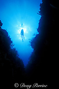 diver swims over coral canyon, Ambergris Caye, Belize, Central America ( Caribbean Sea ) MR 106