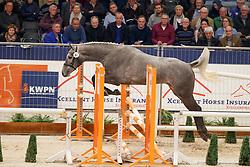 087, Phil van de Wezelse Hoeve<br /> KWPN Stallionshow - 's Hertogenbosch 2018<br /> © Hippo Foto - Dirk Caremans<br /> 31/01/2018