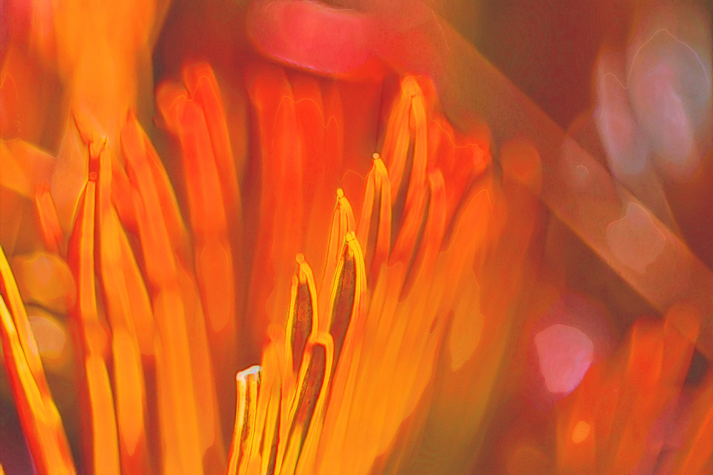 The original shot was a Madagascar Palm Cactus leaf in a fire pit catching ablaze. This shot was done with moderate day lighting to catch some of the softer tones in the abstraction.