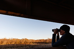 Woman with Binoculars in Viewing Blind, Gus Engeling Wildlife Management Area, Texas, USA.
