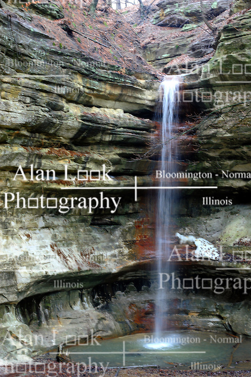24 March 2007: Amidst flood advisories and fears of wide spread flooding, the ample spring rains have brought a flow of water to the falls and green to the timber in St. Louis Canyon in Starved Rock State Park.  Utica, Illinois