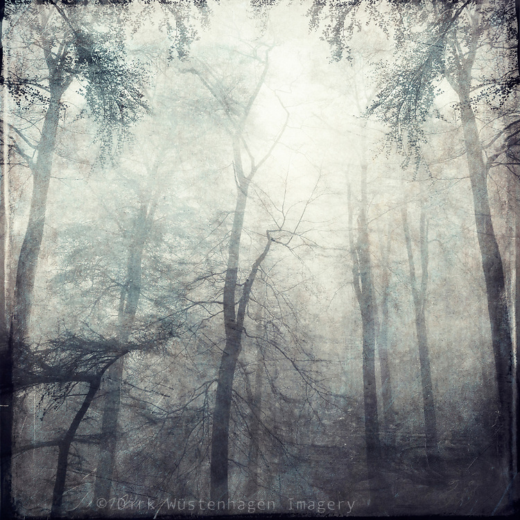 Forest shrouded in fog. Textured photograph<br /> Redbubble Prints: http://rdbl.co/2yKwd4N<br /> Society6 prints: https://society6.com/product/twisted-zkd_print