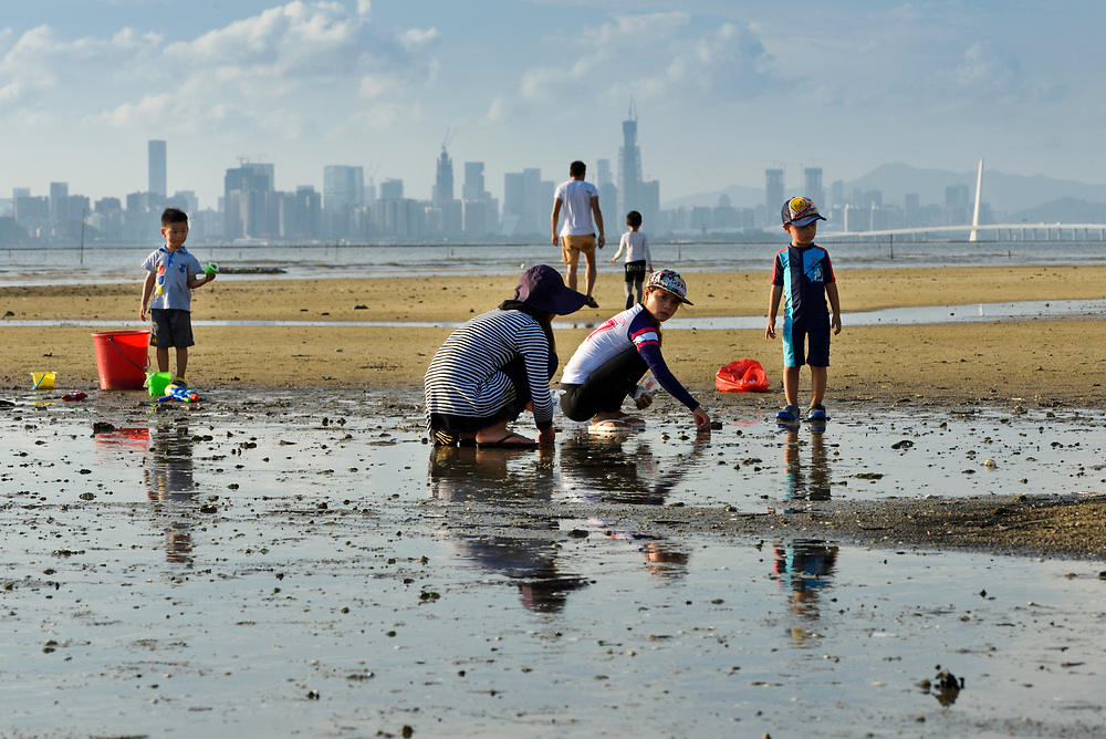 Locals using salt to catch mollusks in the mud with a high risk of creating a unbalances salinity in Ha Pak Nai is a wetland area dominate by a mudflat, Yuen Long District facing Deep Bay, New territories, Hong Kong, China. It is one of few place where juvenile Chinese horseshoe crab, Tachypleus tridentatus, is found. Horseshoe crabs are not crabs at all, but are most closely related to spiders, scorpions and trilobites. Tachypleus tridentatus is a species of horseshoe crab found in the seas off China, Indonesia, Japan, South Korea, Malaysia, the Philippines, Taiwan, and Vietnam. IUCN status is; data deficient.<br /> This Image is a part of the mission Wild Sea Hong Kong (Wild Wonders of China).