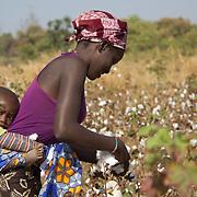 Cotton picking while babysitting her baby cousin: life in Kolda, Senegal.