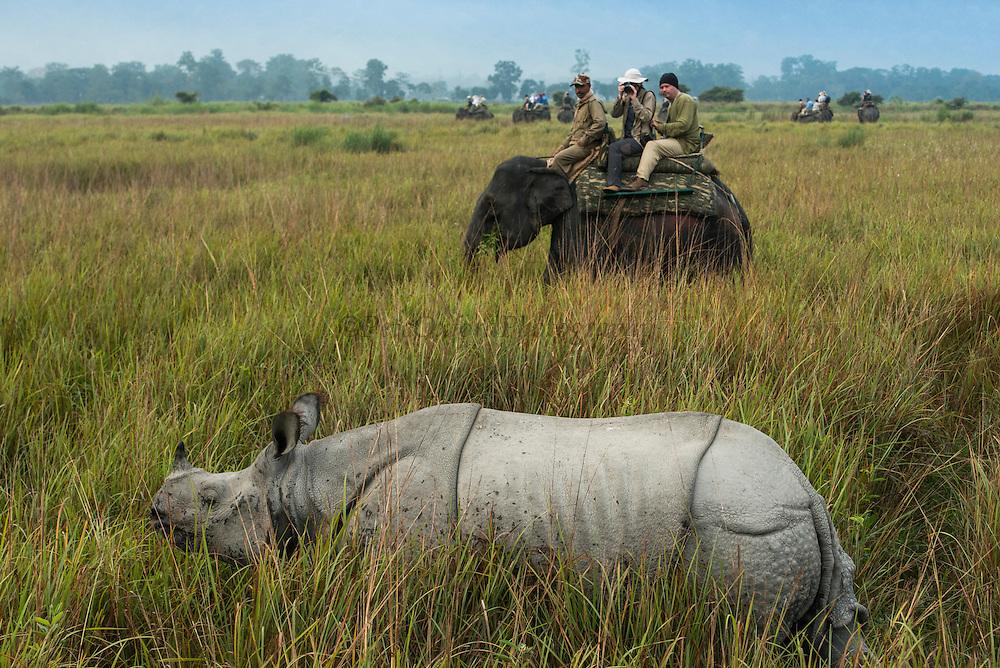 Asian elephant (Elephas maximus) & tourists & Indian rhinoceros (Rhinoceros unicornis)<br /> Kaziranga National Park<br /> Assam<br /> North East India<br /> UNESCO World Heritage Site<br /> ENDANGERED