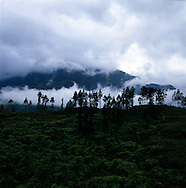 Tree line on top of a hill in Lao Chai Valley, Vietnam.