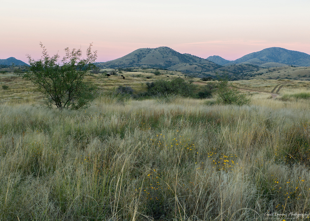 Earth shadow over the Santa Rita foothills near Kentucky Camp, just before sunrise