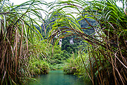 Going through the brush in Vietnam's Trang An in a boat. Tropical Jungle like area surrounding the tourists in the boats. RAW to Jpg