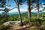 Three Pines<br /> Poke-O-Moonshine Mountain, Adirondacks, NY