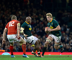 Pieter-Steph du Toit of South Africa<br /> <br /> Photographer Simon King/Replay Images<br /> <br /> Under Armour Series - Wales v South Africa - Saturday 24th November 2018 - Principality Stadium - Cardiff<br /> <br /> World Copyright © Replay Images . All rights reserved. info@replayimages.co.uk - http://replayimages.co.uk