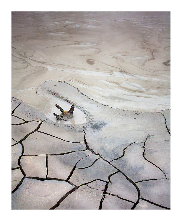 petrified tree trunk poking above surface of a boiling mud pot in Yellowstone National Park, Wyoming