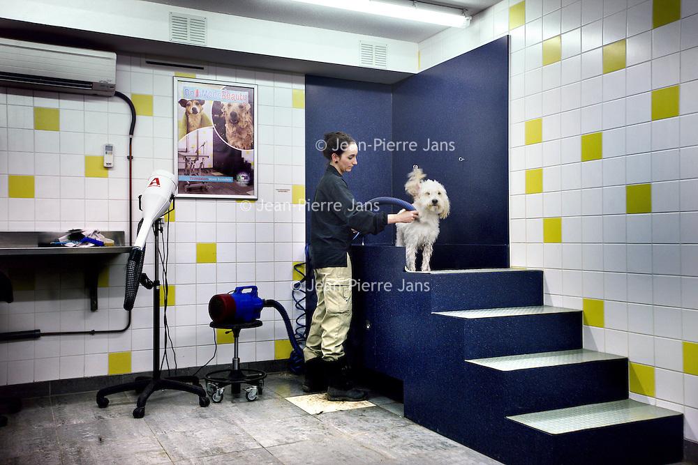 Nederland, amsterdam , 5 december 2013.<br /> dierenasiel aan de Ookmeerweg.<br /> Animal shelter in Amsterdam West at the Ookmeerweg.