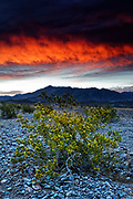 A fiery sunrise colors the sky above mountains and rubber rabbitbrush (Chrysothamnus nauseosus) plants at Furnace Creek in Death Valley National Park, California.