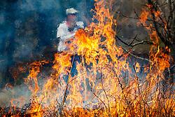 Volunteer managing fire line during controlled burn on Wilt's Prairie, a Blackland Prairie remnant near Ennis, Texas, south of Dallas. Texas, USA.