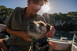 Poor Knights Marine Reserve DoC Pest Control Dogs- Moss and Occi