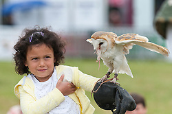 © Licensed to London News Pictures. 23/07/2015. Llanelwedd, Powys, UK. A Barn Owl eats a mouse sitting on a young girl's arm. The young gir, from the audience, takes part in the Falconry Display put on by Ray & Wendy Aliker. Royal Welsh Agricultural Show is hailed as the largest & most prestigious event of it's kind in Europe. In excess of 200,000 visitors are expected this week over the four day show period - 2014 saw 237,694 visitors, 1,033 tradestands & a record 7,959 livestock exhibitors. The first ever show was at Aberystwyth in 1904 and attracted 442 livestock entries. Photo credit: Graham M. Lawrence/LNP