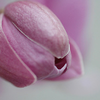 Orchid head