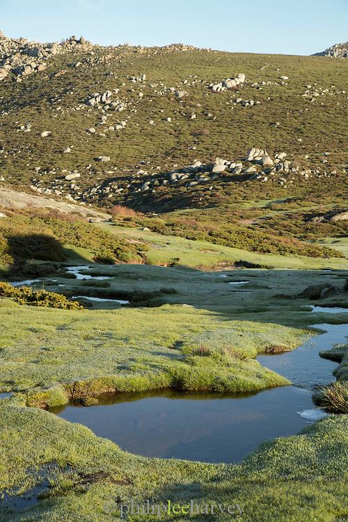 Pond and rocks on plateau, Plateau de Coscione, Corsica, France