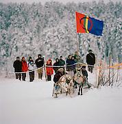Reindeer racing in Lapland, Sweden