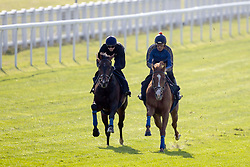 Young Rascal (left) ridden by James Doyle exercises with a stable companion during the Investec Derby Breakfast with the Stars event at Epsom Racecourse.