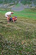 Alaska, Kenai Peninsula. Kenai mts...subalpine. Hikers enjoy field of sub-alpine flowers. PLEASE CONTACT US FOR DIGITAL DOWNLOAD AND PRICING.