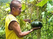 Vegetable and rice farmer, Geronio Ayson picks a pumpkin from his garden in Pamantingan, Esperanza, Sultan Kudarat province, Mindanao Island, The Philippines. Geronio and his wife Teodora have half an acre of vegetable gardens. They inter-crop a huge variety of vegetables including cucumber, green beans, peppers, loofah, green chilli, eggplant, squash and banana. They learnt about inter-cropping and making organic fertiliser at Oxfam's Climate Resiliency Field Schools.