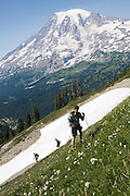 Hikers pass through a steep alpine meadow below Mount Rainier on a traverse of the Tatoosh Range in Mount Rainier National Park, Washington.