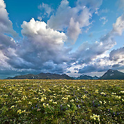 summer wildlife flowers spring to life after storm passes glacier national park blackfeet reservation