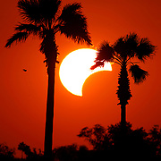 Palm trees frame the sun as it sets showing a partial solar eclipse south of Mission. A solar eclipse occurs when the moon passes between the Earth and the Sun. The eclipse could be seen for about a half an hour before sunset in the Rio Grande Valley. <br /> Nathan Lambrecht/The Monitor