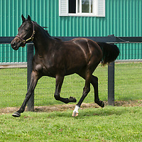 Fade Out - filly - Sportswriter - Fade