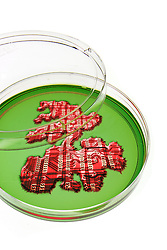 petri dish with red circuit growth