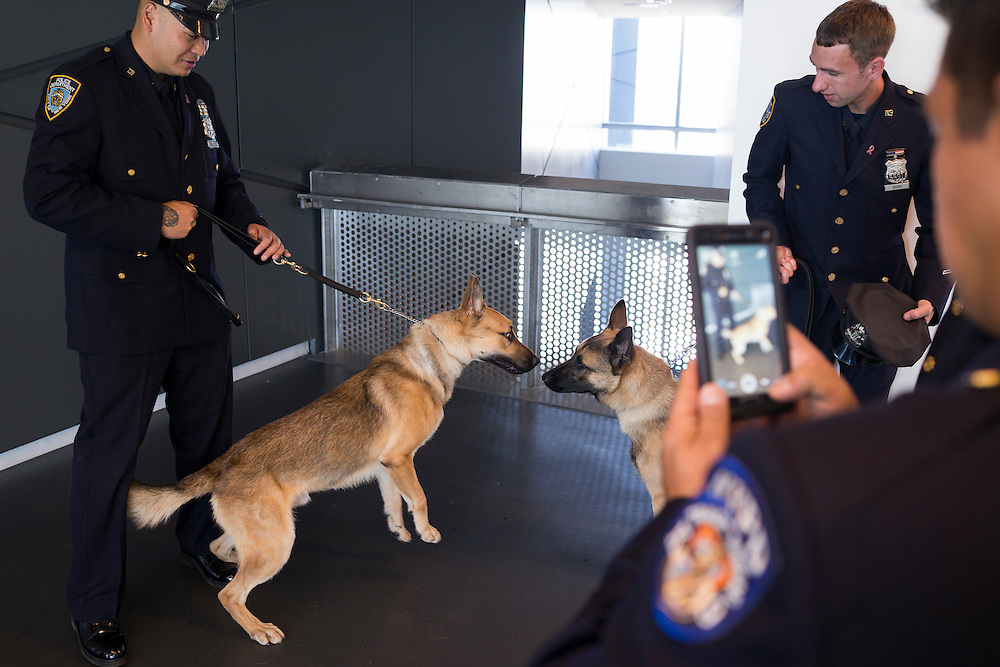 Police Officer Jin Tsoi, left, with Canine Benny, honoring Lieutenant John Benintendo of TD30, and Police Officer Brian Buith with Canine Dennis, honoring Detective Dennis Guerra of PS1, before the NYPD Transit Bureau Canine Unit Graduation Ceremony at the College Point Police Academy in Queens, NY on Tuesday, Oct. 6, 2015.<br /> <br /> Andrew Hinderaker for The Wall Street Journal<br /> NYSTANDALONE