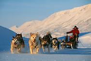 Dog sledding, Svalbard / Spitsbergen, Norway<br /> SWD-002267