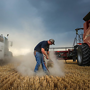 As a storm brews, Rodney Wolgemuth, 22, cleans a combine filter during wheat harvest near Hamer, Idaho. August 2017.